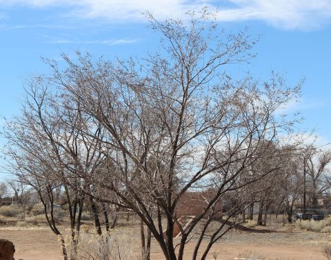 Tree_Incommunicado