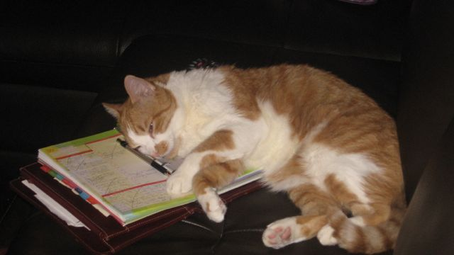 "Cat sleeping on planner in which I have to write down ""Work on scene that is the most horrific scene in the whole book--except for the next scene you have to work on."""