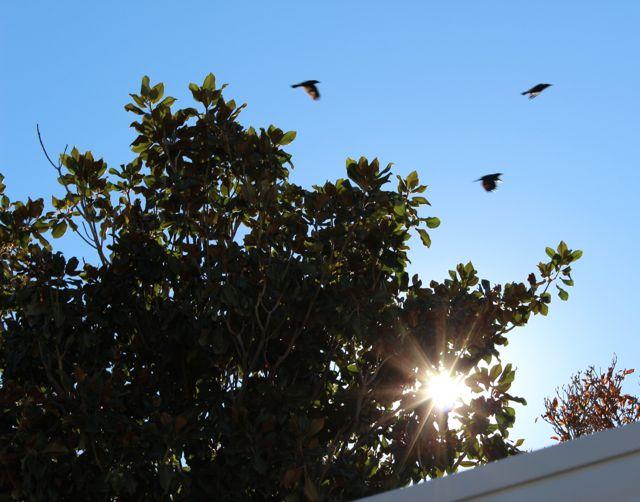 birdsflying