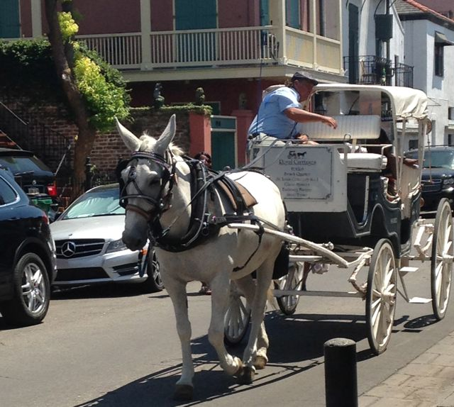 NOLA-horse-drawn-carriage