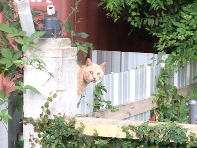 First morning, a stray cat looking at me from the wall in the back yard.