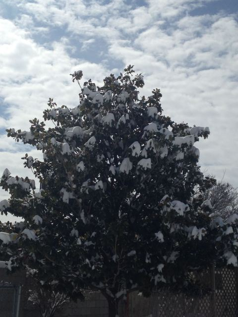 Snow covered tree and sky